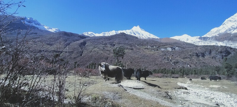 Manaslu Base Camp View