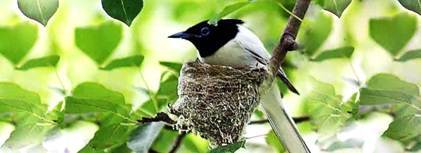 Phulchowki Bird Watching Day Tour